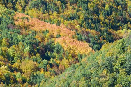 Fall forest in the Pyrenees photo
