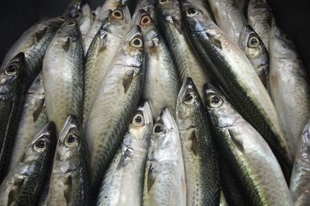 fishy: fresh fishes in a fish market  Stock Photo