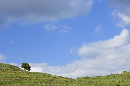 lonely tree in a meadow Stock Photo - 6702855