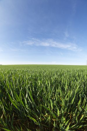 forefront: vibrant green grass and clear blue sky Stock Photo