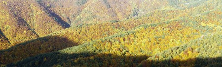 autumnal panorama of a forest in Vio valley, Pyrenees, Spain