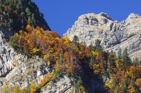 pyrenees: autumn forest and rocky mountain pineta Valley, Pyrenees, Spain