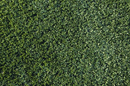 background created  by a closeup of artificial grass photo