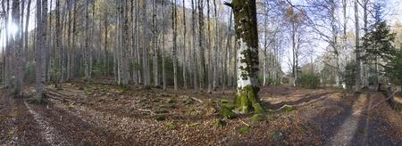 ordesa: autumn forest in the Ordesa National Park, Spain Stock Photo