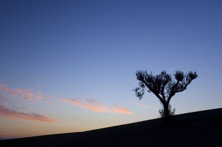 silhouette  of a lone tree in  a colorful sunset photo