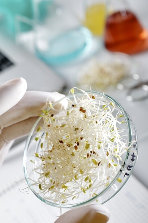 transgenic  food inspection in the laboratory of biotechnology photo