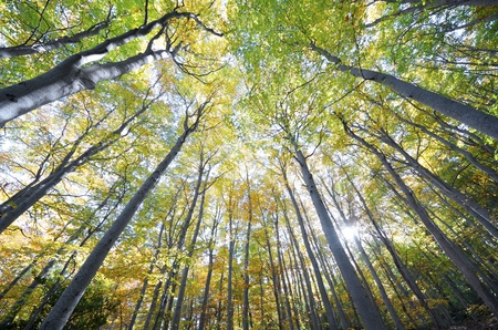 autumn leafs: view of  a beech forest in the natural park of Moncayo, Zaragoza, Aragon, Spain Stock Photo
