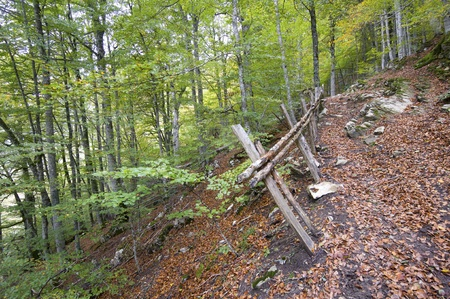 road and fence in autumn in the forest Irati, Pyrenees, Navarre, Spain photo