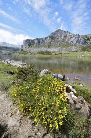 view of  the lakes of Covadonga, National Park Picos de Europa, Asturias, Spain photo
