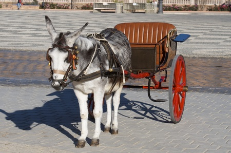 hackney carriage: donkey and  tourist coach for children in Seville, Andalucia, Spain