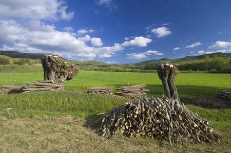brushwood: felled tree in a meadow in Teruel, Aragon, Spain