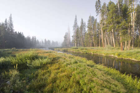 River and forest in Yellowstone National Park, United States photo