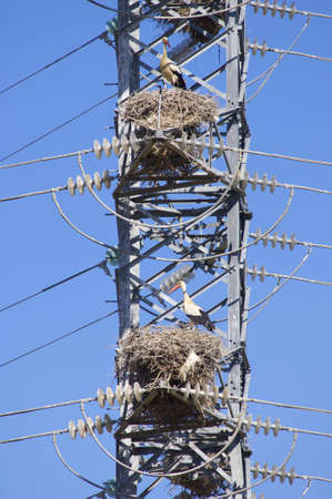 Storks in a high tension tower in saragossa, Aragon, Spain photo
