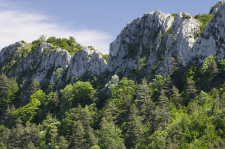 forested: view of the forested mountains of Santo Domingo, Saragossa, Aragon, Spain