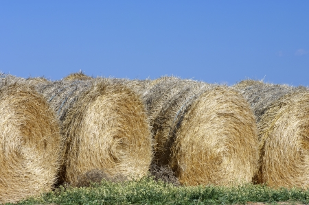 round bale of straw with blue and clear sky photo