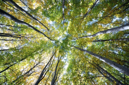 view of  a beech forest in the natural park of Moncayo, Zaragoza, Aragon, Spain 写真素材