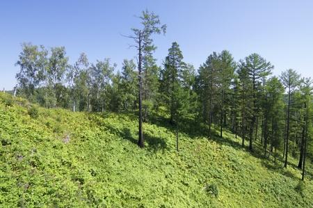 listvyanka: Forest near of Lake Baikal, Listvyanka, Siberia, Russia