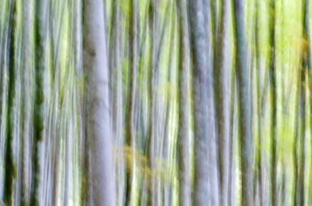 abstract beech forest scene in autumn, Irati Jungle, Pyrenees, Navarra, Spain Stock Photo - 16183075