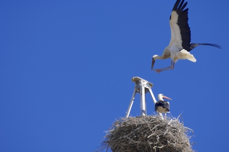 Storks in a high tension tower with blue sky photo