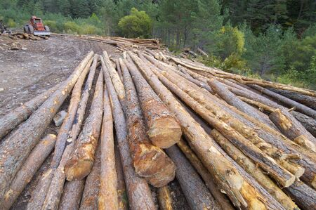 group of pine logs felled in a forest, Anso valley, Pyrenees, Huesca, Aragon, Spain Stock Photo - 17707197