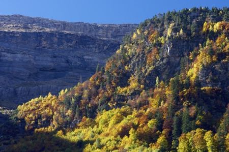 autumnal forest in Pineta valley, Pyrenees, Huesca, Aragon, Spain Stock Photo - 18009442