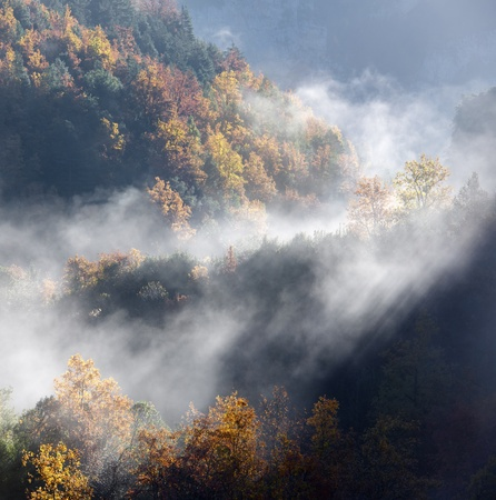 anisclo: Autumnal forest in the valley of Anisclo, Ordesa National Park, Pyrenees, Huesca, Aragon, Spain
