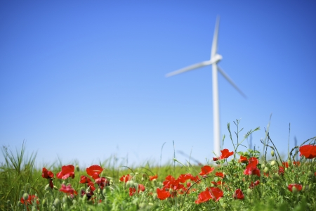 windmill for renewable energy production and field of poppies photo