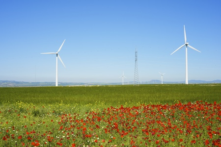 windmills for renewable energy production and field of poppies photo