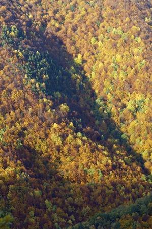 fall forest in Vio valley, Huesca, Aragon, Pyrenees, Spain Banco de Imagens