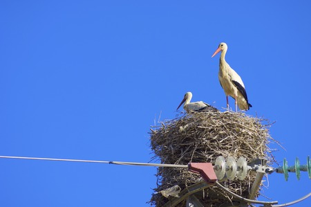 Stork in a high tension tower in saragossa, Aragon, Spain photo