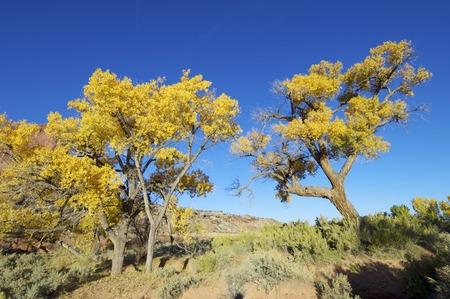 indian creek: Autumn in Indian Creek, near Canyonlands, Utah, USA