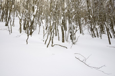 winter forest, valley of Aspe, Pyrenees, France. photo