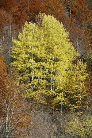 anisclo: Autumnal scene in Anisclo Valley, Ordesa National Park in Pyrenees, Spain