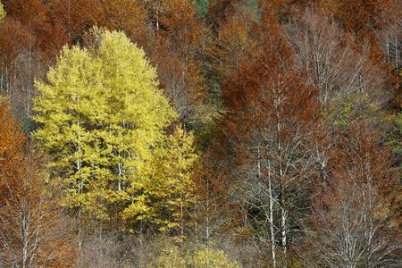 Autumnal scene in Anisclo Valley, Ordesa National Park in Pyrenees, Spain