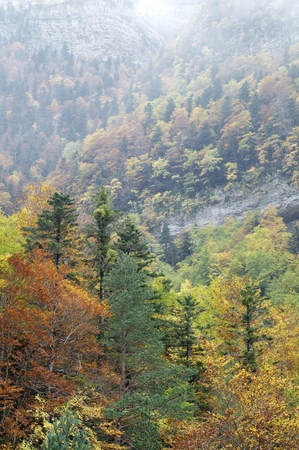 Autumnal beech trees in the valley of Ordesa, Pyrenees, Huesca, Aragon, Spain photo