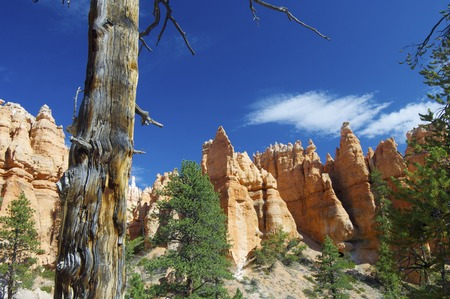 Pinnacles in Bryce Canyon National Park, Utah, Usa photo
