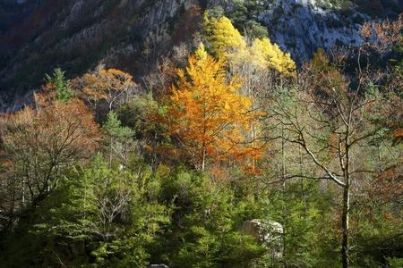 anisclo: Autumnal scene in Anisclo Valley, Ordesa National Park, Pyrenees, Huesca, Aragon, Spain