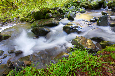 silky stream in a forest. Valley of Aspe, Pyrenees, France photo
