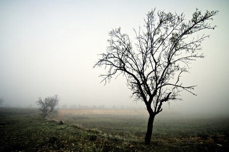 bare trees in the fog, Zaragoza province, Aragon, Spain. photo