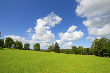 Green meadow with trees in Normandy, France. Stock Photo