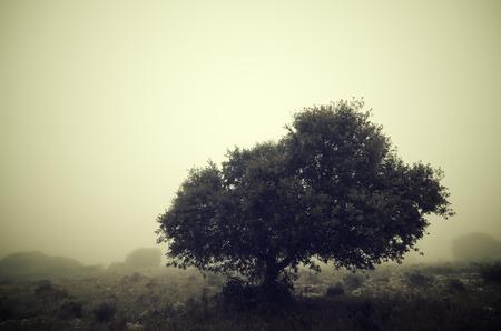 Trees in the fog, Zaragoza province, Aragon, Spain. photo