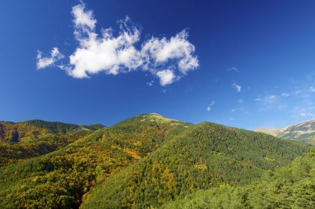 autumnal panorama of a forest in Vio valley, Pyrenees, Huesca, Aragon, Spain