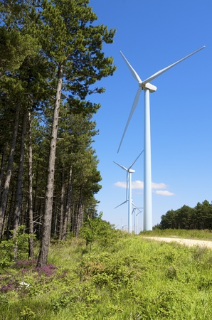 aras: group of windmills for renewable electric energy production and pine forest, Aras, Navarre, Spain Stock Photo