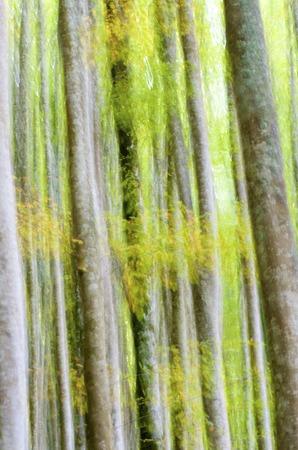 navarra: abstract beech forest scene in autumn, Irati Jungle, Pyrenees, Navarra, Spain Stock Photo