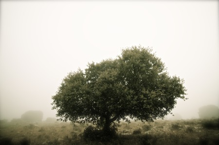 Trees in the fog, Zaragoza province, Aragon, Spain. photo