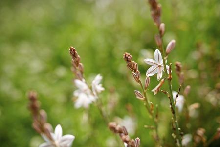 Wild flower close up in Zaragoza Spain Aragon Province.