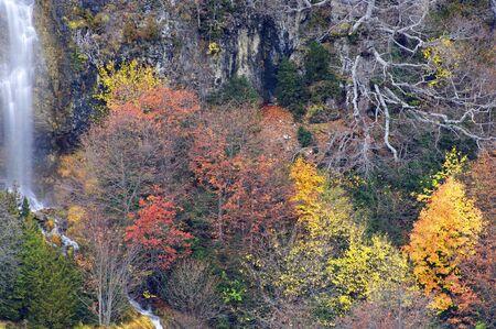 ordesa: Forest an waterfall in Ordesa national Park, Anisclo Canyon, Pyrenees, Huesca, Aragon, Spain.