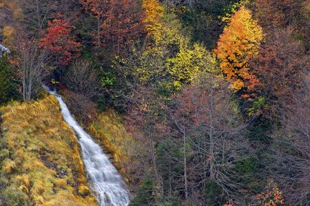 anisclo: Forest an waterfall in Ordesa national Park, Anisclo Canyon, Pyrenees, Huesca, Aragon, Spain.