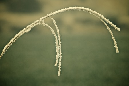 blades: Frost on blades of grass. Stock Photo
