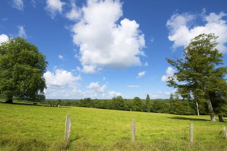 normandy: Green meadow with trees in Normandy, France. Stock Photo